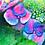 Thumbnail: Flowers II, Royal Garden, Brussels