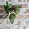 DIY Holiday Project: Greenery Chicken Wire Hanging Basket
