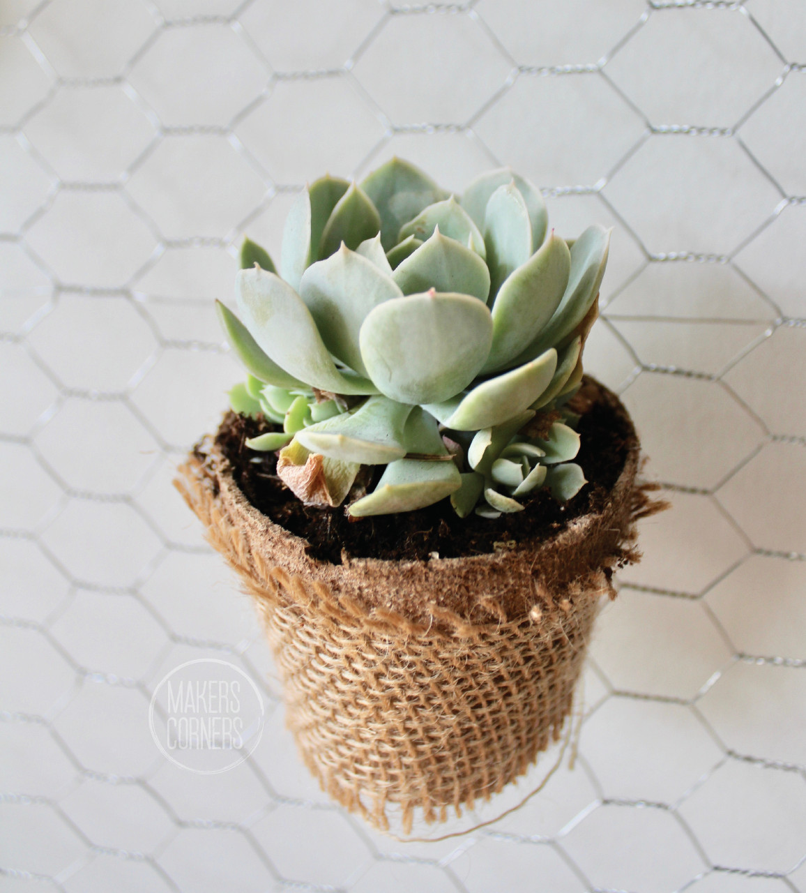 Diy How To Make A Hanging Succulent Planter Wall