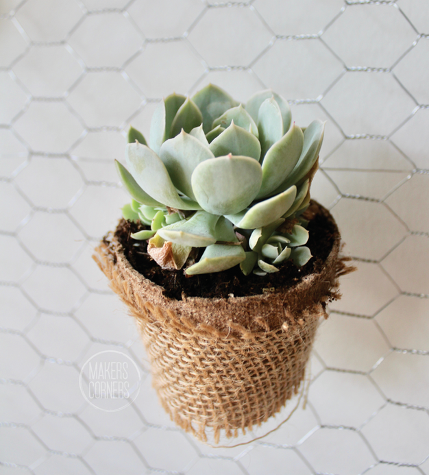 DIY: How to Make a Hanging Succulent Planter Wall