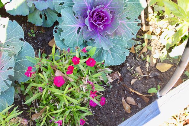 5 Winter Garden Tips