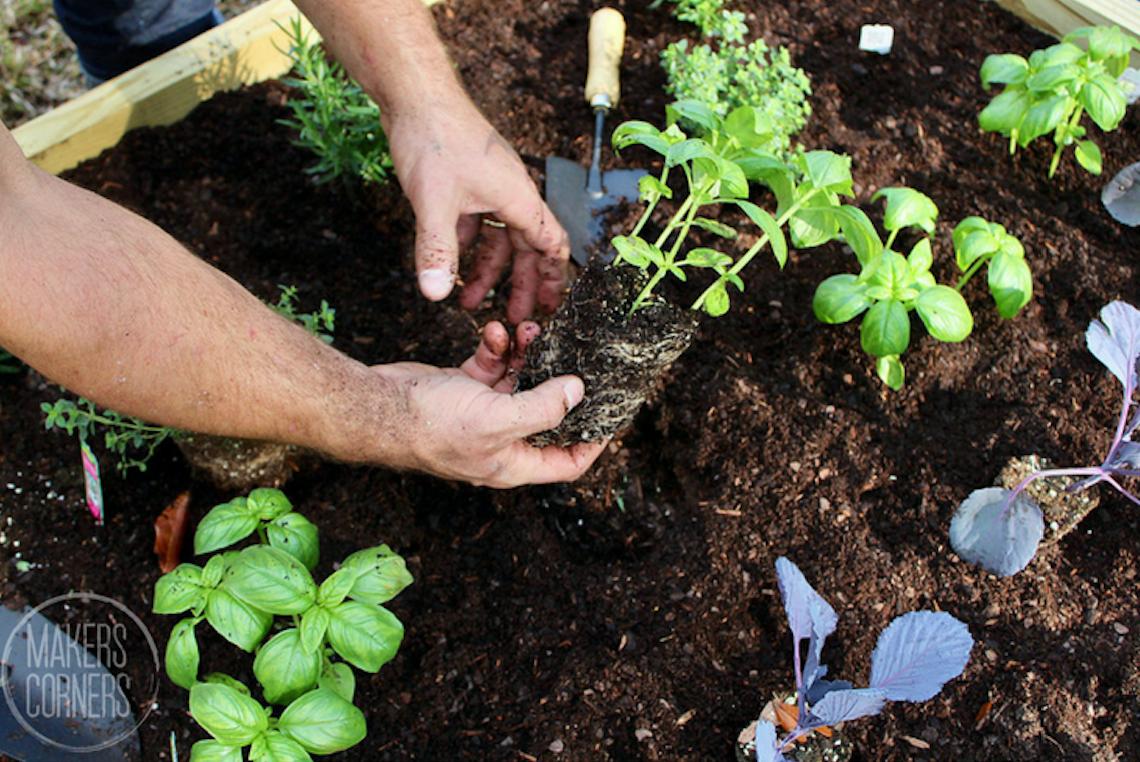 6 Plants That Repel Flies
