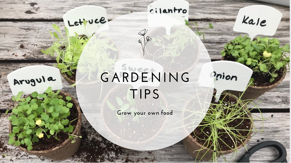 gardening-blog-makers-corners.png