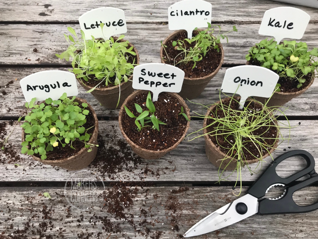 Seed Planting Guide Part 2: When to Transplant Seeds