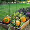 What to Plant in a Fall Garden
