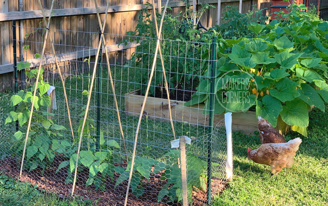 How to Make a Green Bean Trellis Using Welded Wire