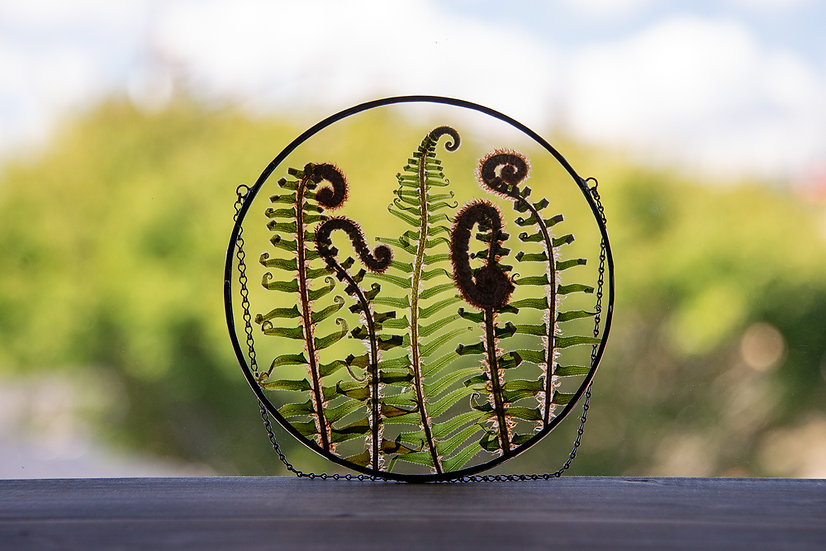 """Fiddlehead Ferns - Stained Glass UV Frame - 6.5"""" Round (#1)"""