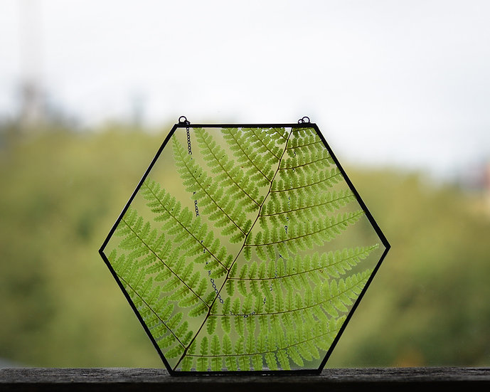 """Lady Fern - 7x7"""" Hexagon Stained Glass Float Frame"""