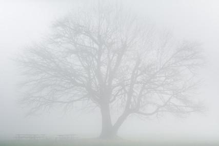 Fog + Trees at Milo McIver State Park