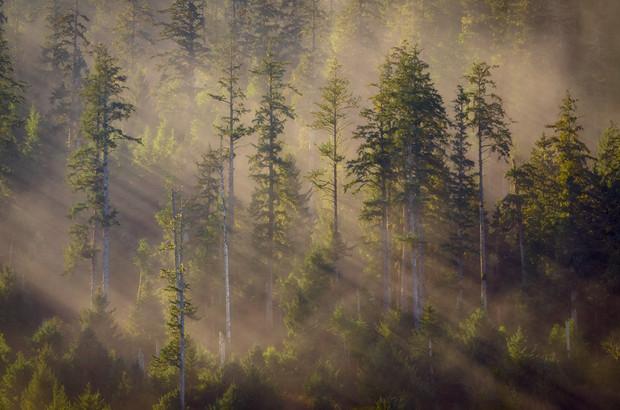 Landscapes, Forests & Trees
