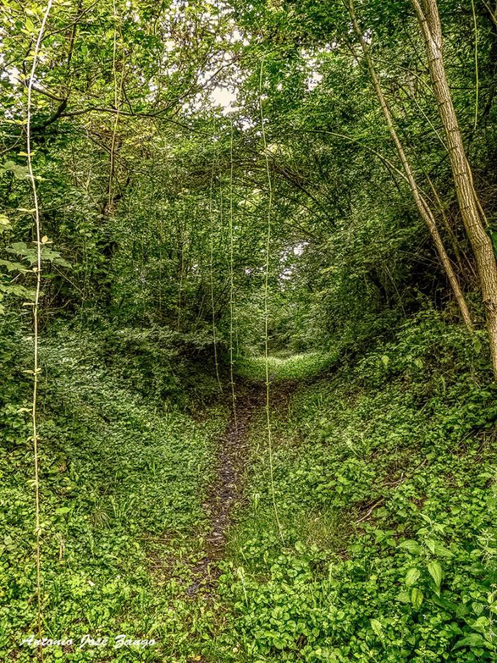 bosque verde 4.jpg
