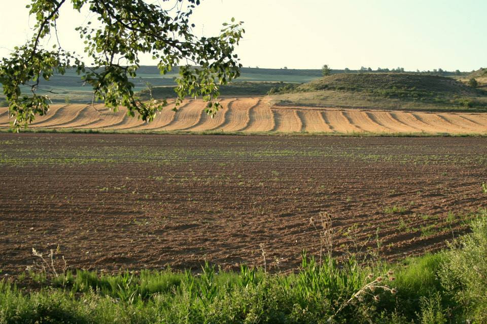 campo arado 9.jpg