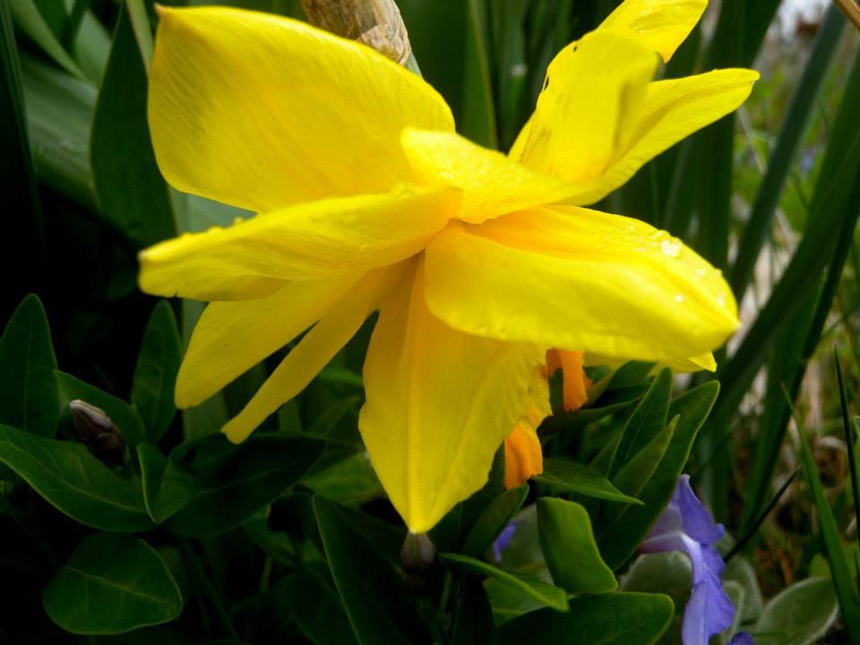 flor sola amarilla.jpg