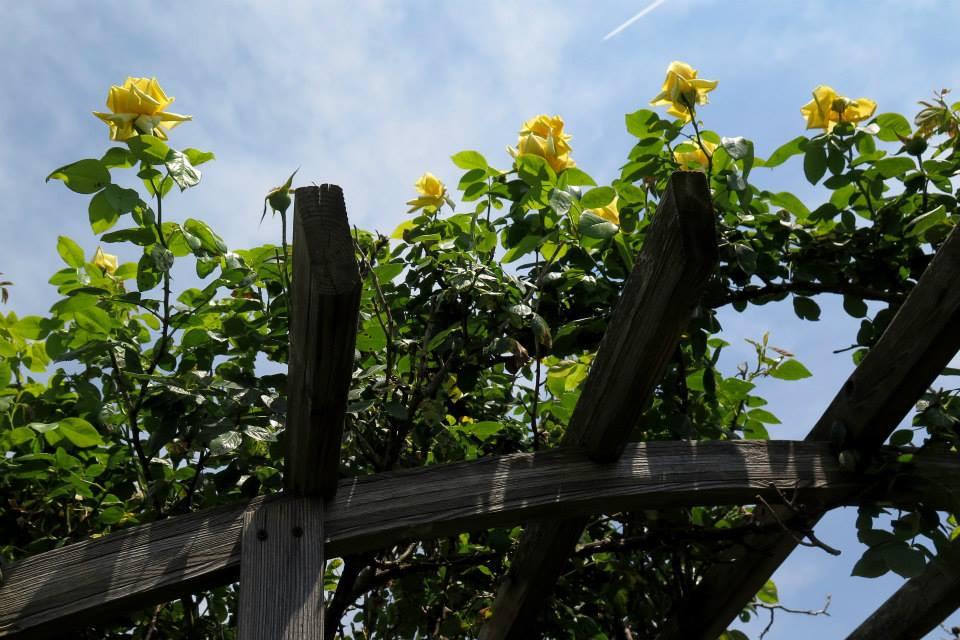 flores postes 17.jpg