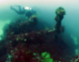 Sepia  Shipweck Western Australia