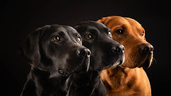 Three-dogs-black-background_5120x2880.jp