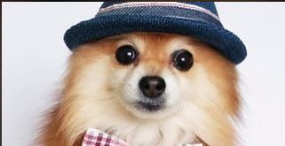 I am Vancouver Dog
