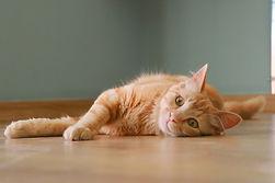cat-2243438_1280.jpg