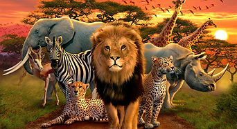 Animals of Africa.jpg