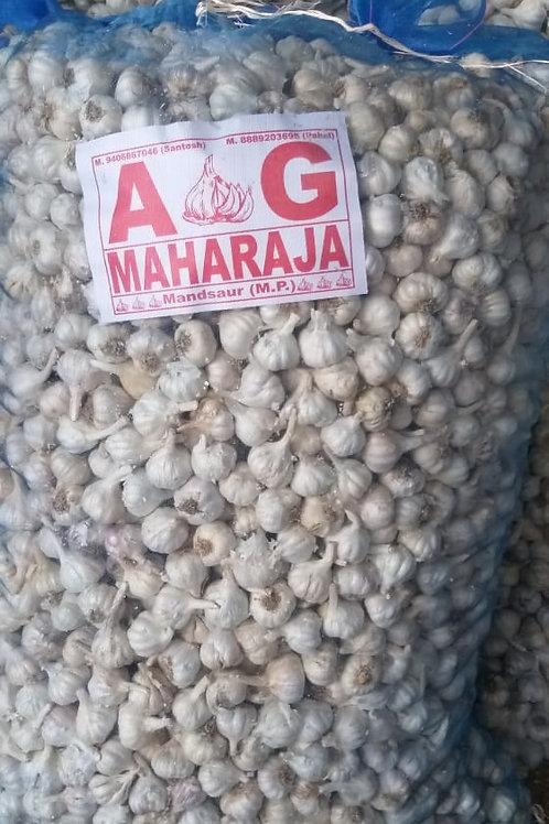 Maharaja garlic