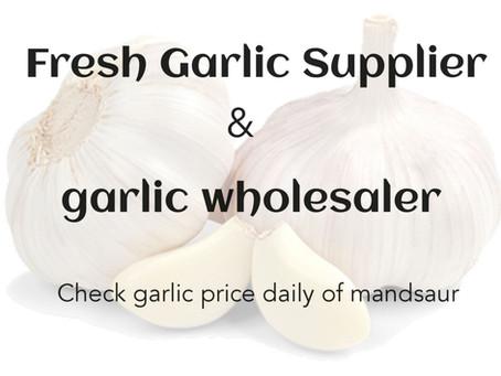 garlic wholesaler and get price updates of garlic