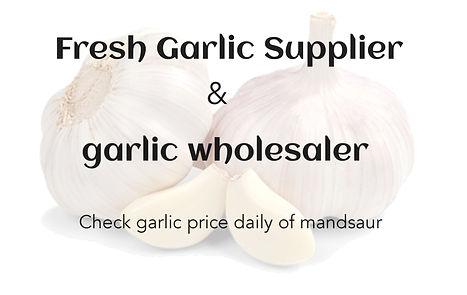 Garlic Rate in Mandsaur