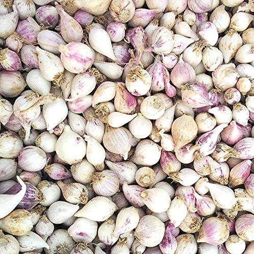 Ek kali garlic - solo garlic
