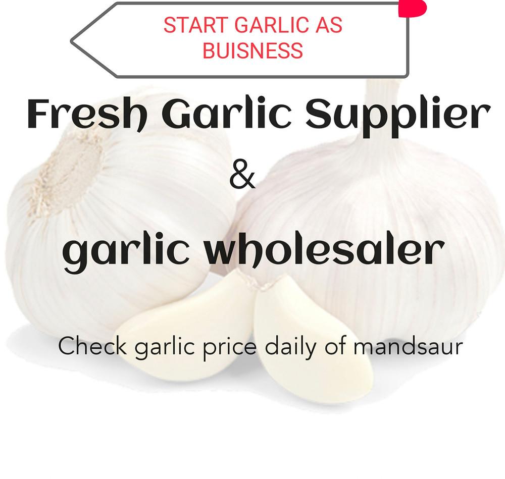 Start garlic wholesale business & check Garlic price daily