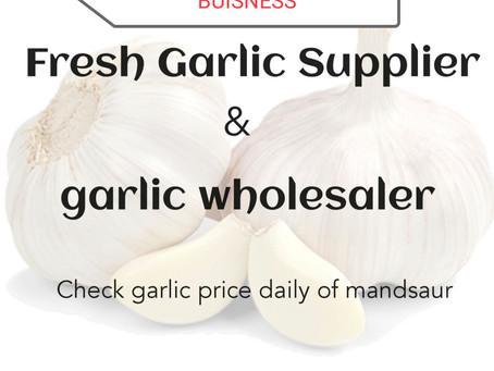 How to Start Garlic Buisness ? Check garlic price
