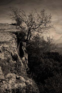 Flickr - árbol