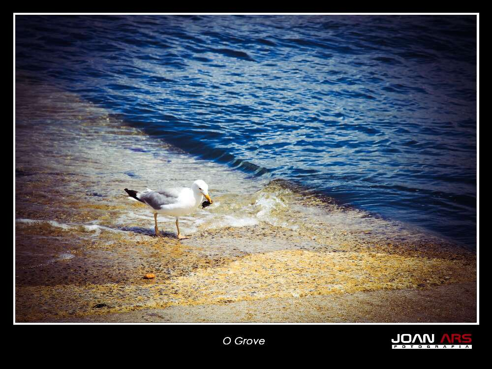 Galicia-2014-440.jpg