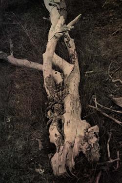 Flickr - el árbol caído