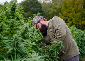 New York's out, the USDA is in… What's Next for Hemp Growers?