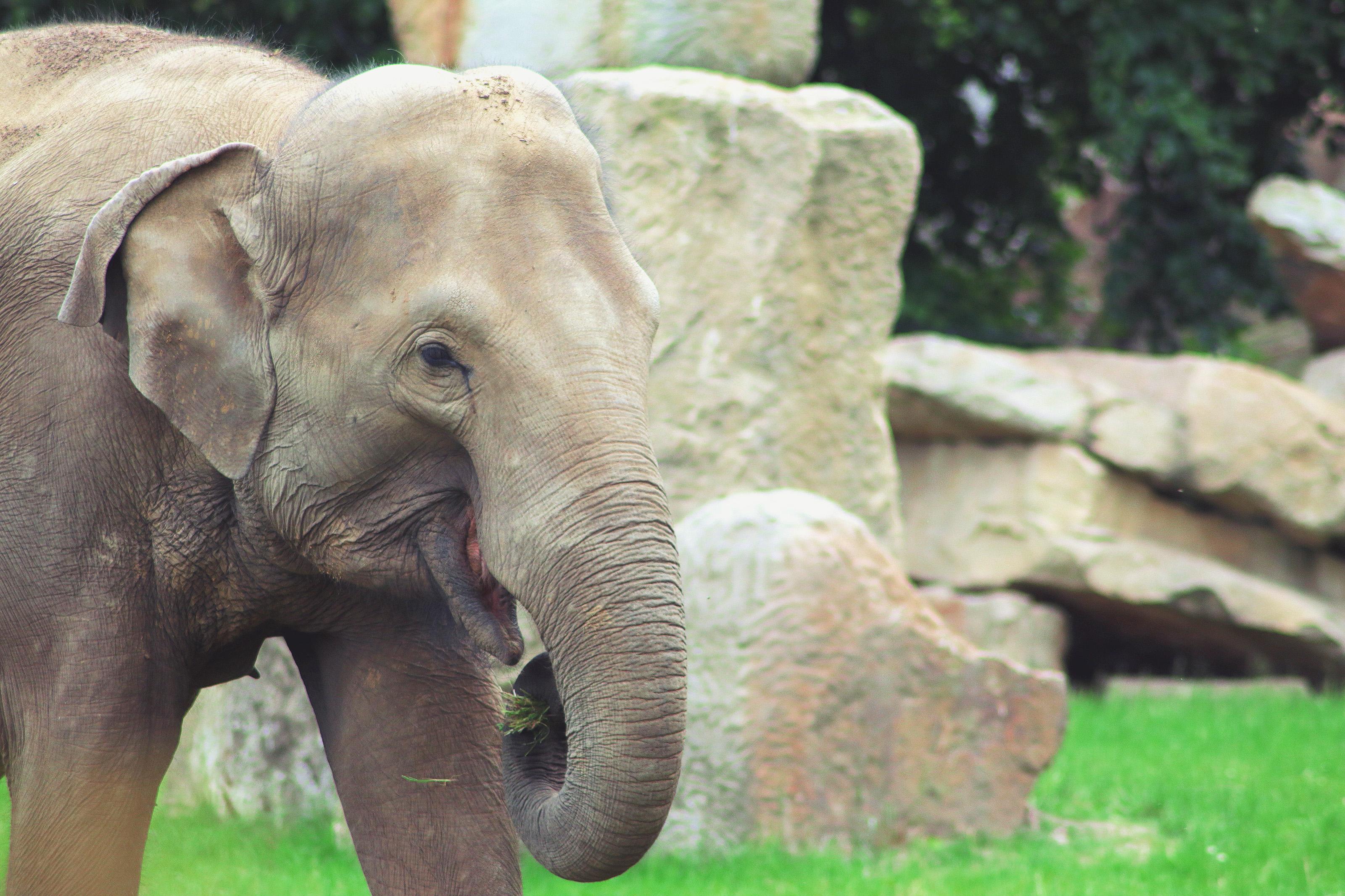Animals & Zoos
