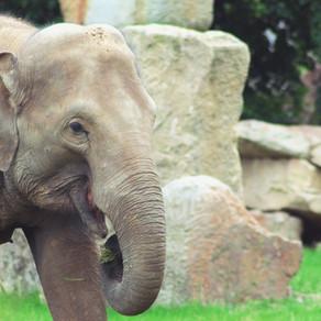 Genuius Gia Goes to the Zoo