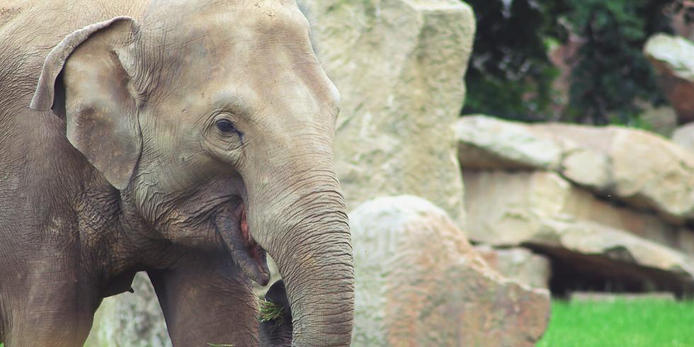 OKC Zoo Fun Day