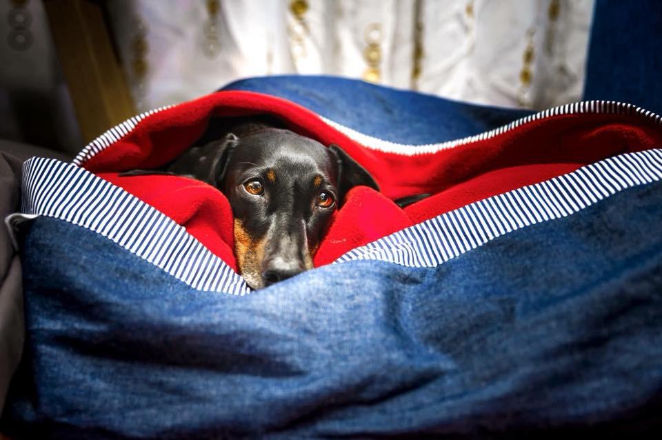 camas para mascotas hechas en chile