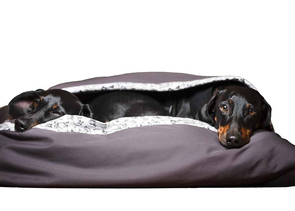 perritos en saco para dormir