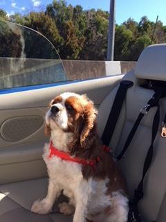 Norman in car.JPG