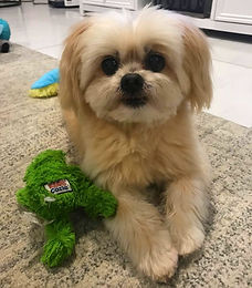 Teddy with frog toy.jpeg