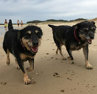 Brandi and Jessie croppe