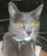Misty cat.jpg