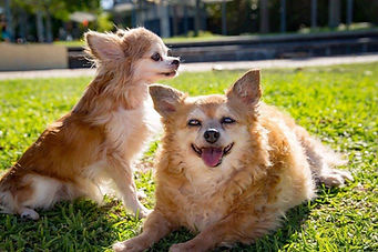 Sandy and Ginger.jpg
