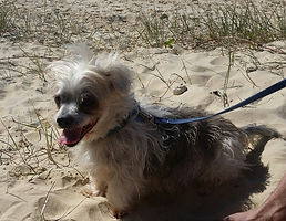Toby on beach.jpg