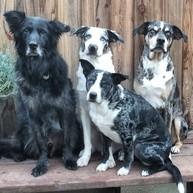Draco, Ofi, Dallas and Orion