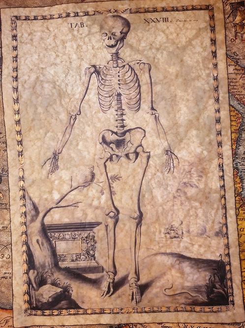 Human Skeleton, John Fotherby, 1729