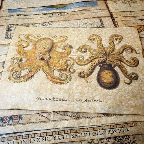 Ernst Haeckel's Gamochonia - Octopus