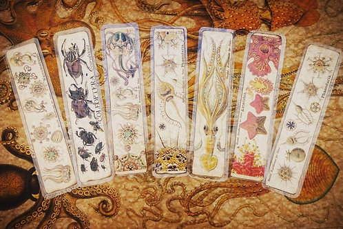 Laminated bookmark set with Haeckel's drawings