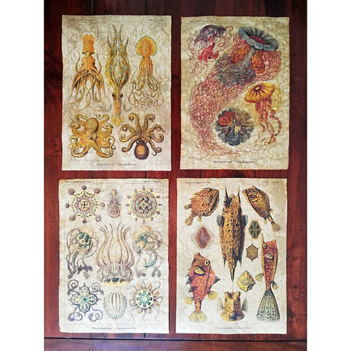 BUNDLE of four pictures by Ernst Haeckel - FOUR for the price of THREE