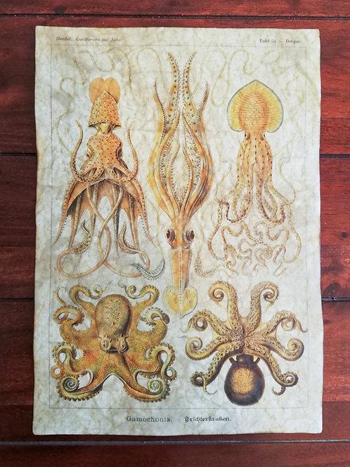 Ernst Haeckel's Gamochonia